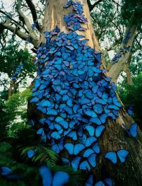 borboletas arvore